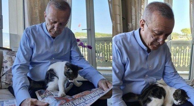 Cumhurbaşkanı Erdoğan'ın torununun kedisiyle verdiği poz sosyal medyanın gündemine oturdu