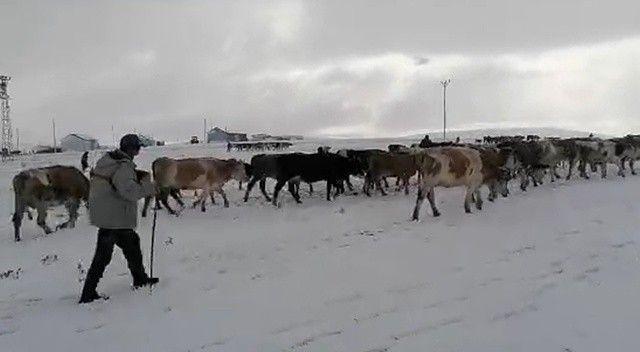 Kar erken geldi: Yaylacılar dönüşe geçti