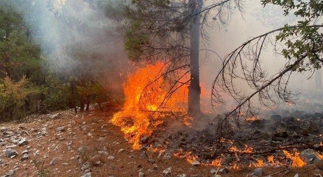 OGM: 13 orman yangını tamamen kontrol altında