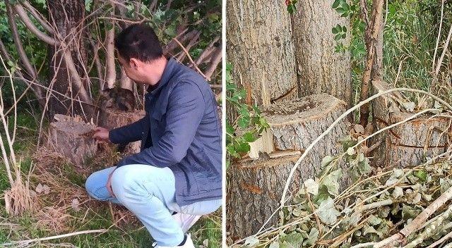 Tarlasına giden adam şoku yaşadı: Dikili 20 ağacını çaldılar
