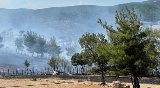 Çanakkale'de orman yangını! Havadan müdahale ediliyor