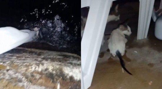 Denize düşen yavru kedi bez parçasıyla kurtarıldı