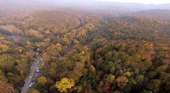 İstanbul'da ormanlara giriş yasağı uzatıldı