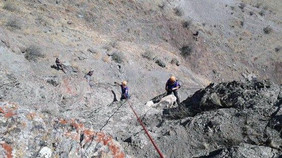 Kayalıkta mahsur kalan koyunlar, halatla kurtarıldı