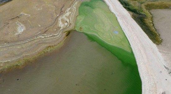 Kuraklık nedeniyle suların çekildiği Atatürk Barajı yeşile büründü!
