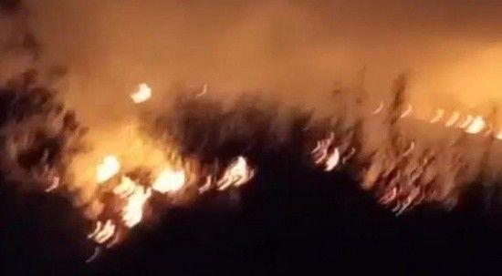 Tekirdağ'da çıkan yangın kontrol altında