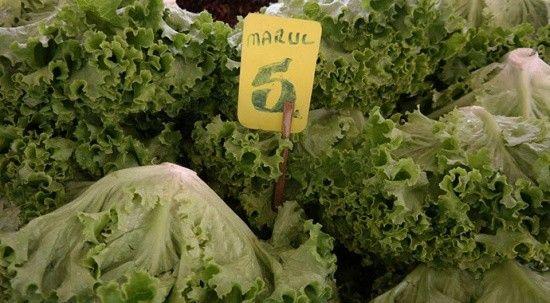 Yeşillik ürünlerinde zam şampiyonu marul oldu! Fiyatı 10 günde iki katına çıktı