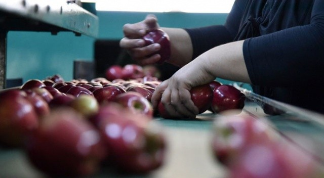 """Elma üreticilerinden tepki: """"Çiftçi dışında herkes kazanıyor"""""""