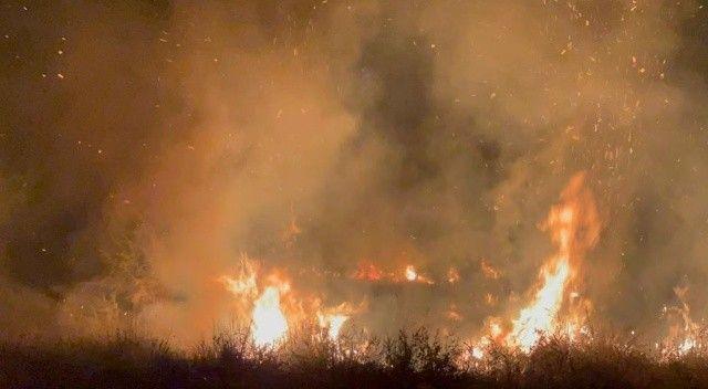 İznik Gölü kıyısında yangın! 20 dönüm alan küle döndü