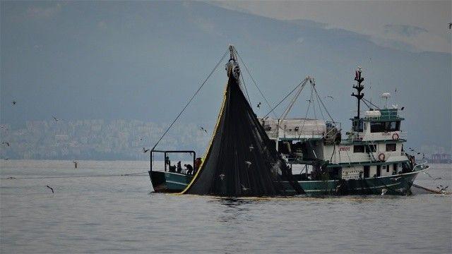 Marmara'da balık bolluğu! Birkaç saatte 600 ton...