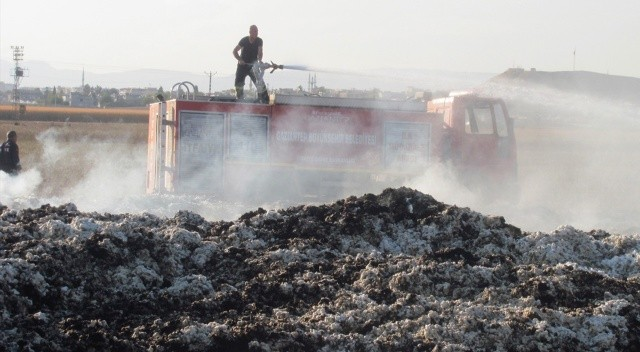 Tarla yangınında 90 ton pamuk yandı