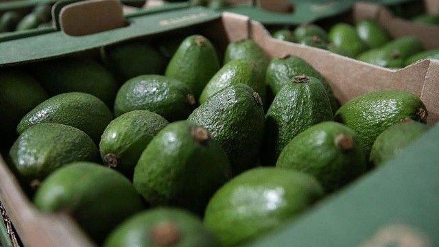 Tropikal meyve ihracatı yüzde 172 arttı