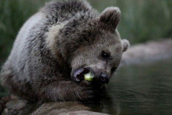 Kanada'da ayıları besleyen kadına rekor ceza!