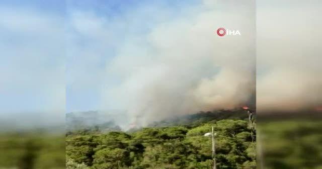 Heybeliada'daki orman yangınına vatandaşlar pet şişelerle su taşıdı