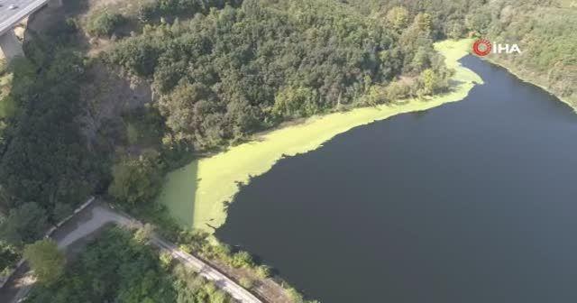 İstanbul'da ürküten manzara: Elmalı Barajı'nın suyu yine yeşile döndü