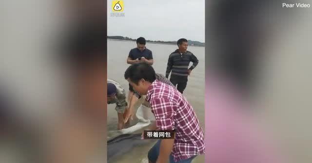 Kıyıda sıkışan yunusu el birliğiyle kurtardılar