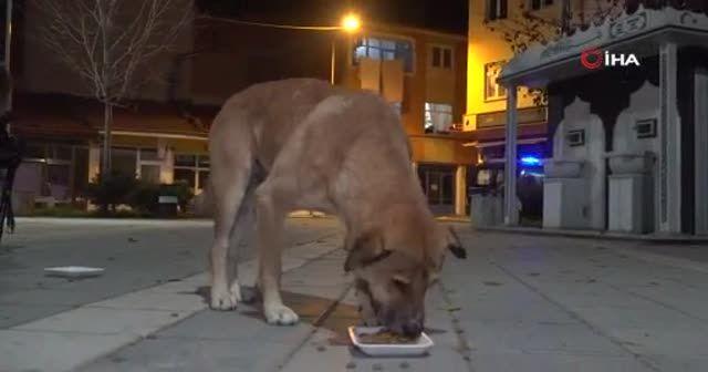 Belediye başkanı, kısıtlamada aç kalan köpekleri elleriyle besledi