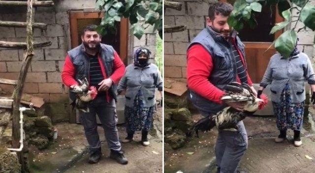 Trabzon'da 'Anne' diye bağıran horoz kesilmekten kurtuldu